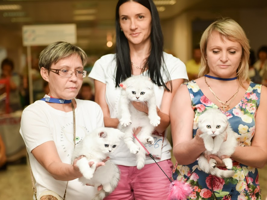 My litter on cat show