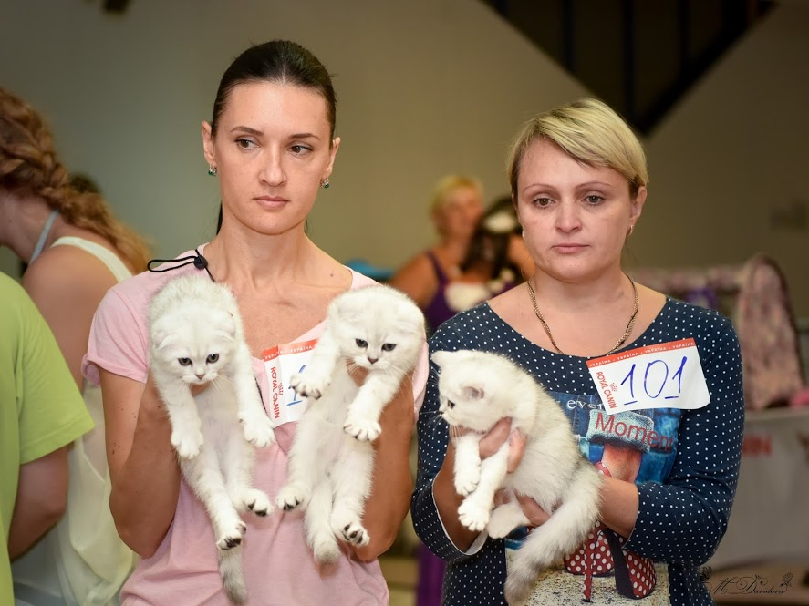 Our litter on cat show